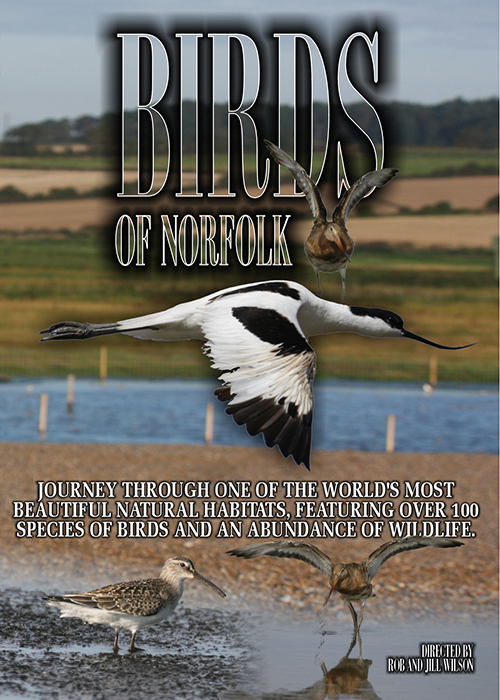 Birds Of Norfolk: A Bird Watchers Dream Part 2